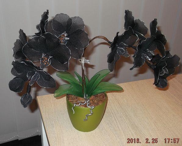 fekete orchidea zsírégető)
