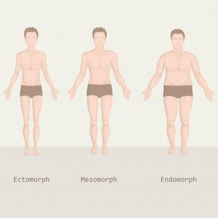 négy testtípus fogyás)