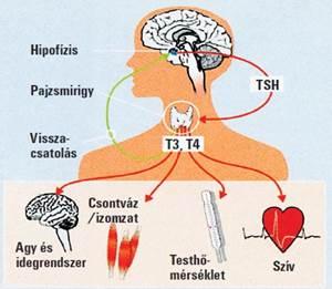 Pajzsmirigy-gyulladás, Euthyrox, rosszullétek :: Keresés - InforMed Orvosi és Életmód portál ::