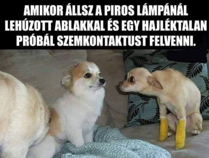 próbál lefogyni mémek)