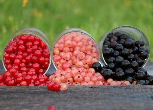 Kapcsolj turbó fokozatra! 5 anyagcserepörgető étel | Well&fit