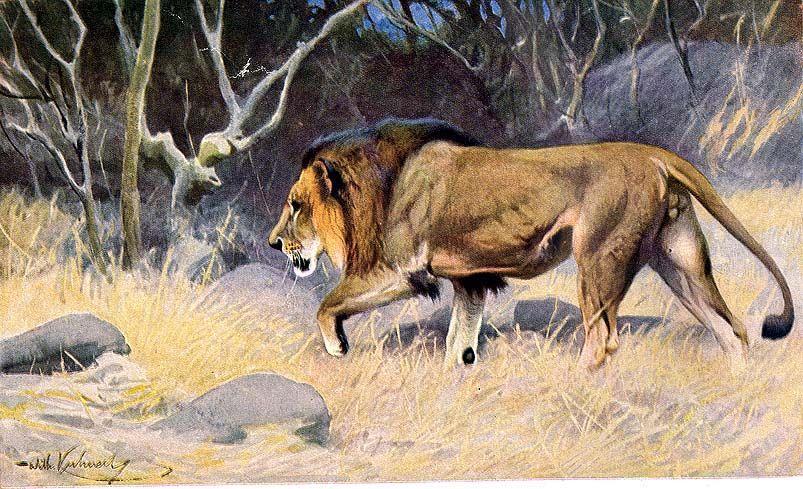 oroszlánok sörény veszteség)