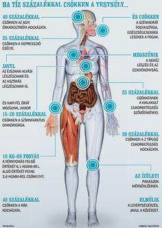 A hormonális elhízás okai és kezelése - Nőgyógyászati Központ