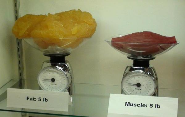 mennyi ideig veszítheti el a testzsír százalékát)