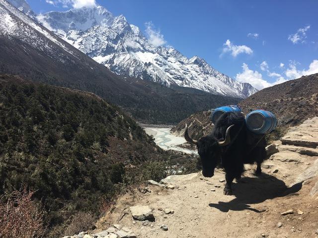 hegyek állat- egészségügyi fogyás