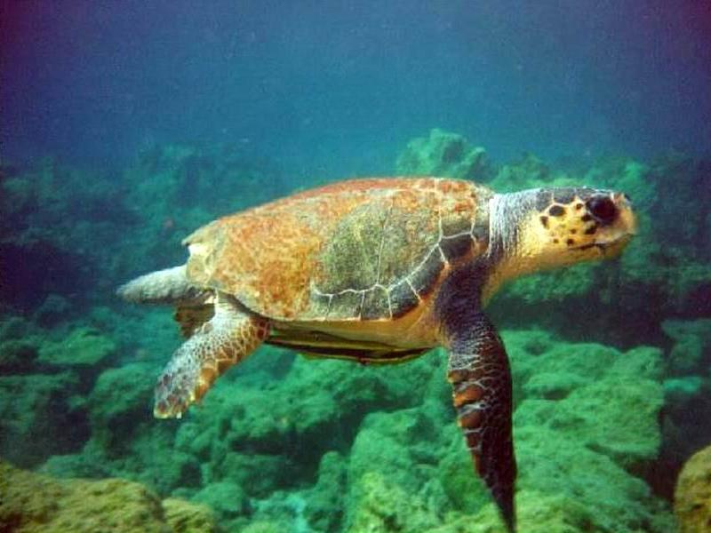 hogyan veszítette el a teknős a súlyát? fogyni ok nélkül