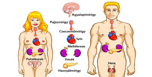 hogyan lehet lefogyni az agyalapi test típusa