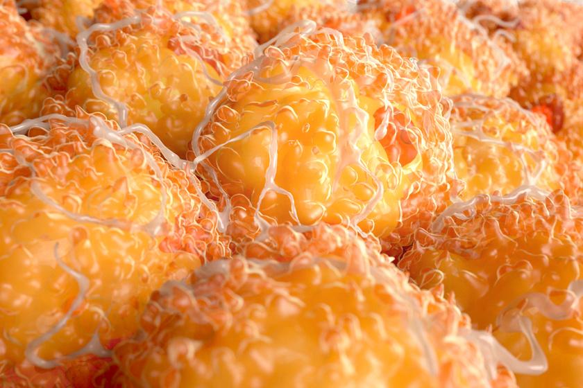 10 tudományos módszer, hogy örökre megszabadulj a felesleges zsírtól