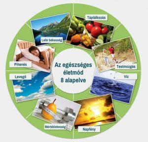 egészséges életmód alapelvei)