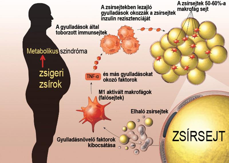 metabolikus fogyás omaha
