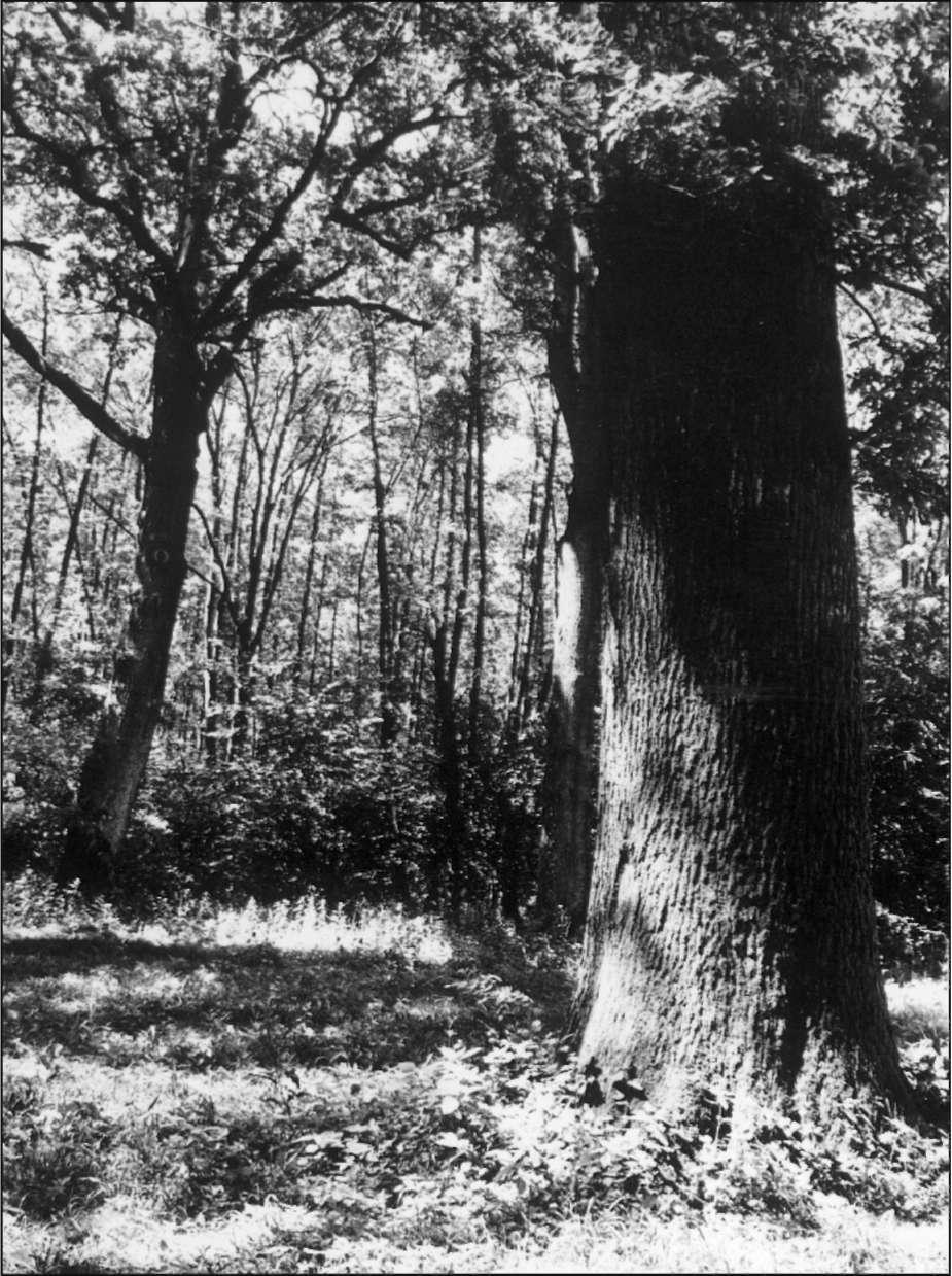 nyomán erdő fogyás